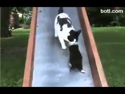 Непослушные котята и самая терпеливая мама-кошка