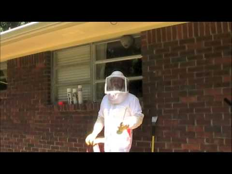 Bald Faced Hornet Nest Control and Removal