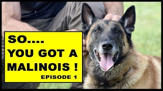 So You Got a Malinois Working Dog  episode 1  Dog Training Video