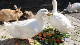Rescued Animals Living The Good Life!