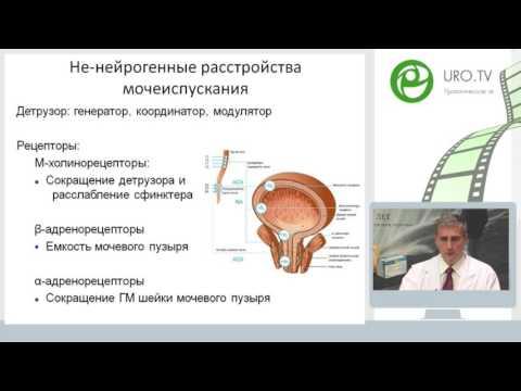 Корнеев И А - Нарушение мочеиспускания у мужчин: эпидемиологические данные в РФ и подходы к лечению