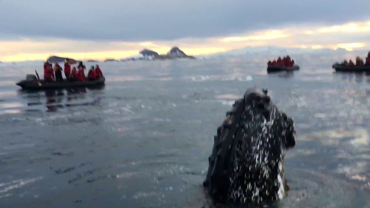 And then this happened...Friendly whale in Antarctica