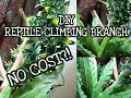 No Cost DIY Reptile Climbing Branch | Building A Tree For A Crested Gecko Enclosure