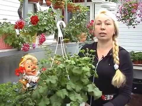 Ампельные растения для сада и балкона.  Выбираем лучшие.