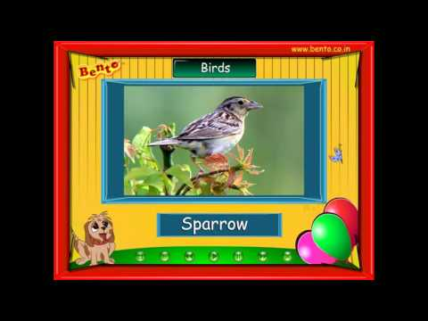 Learn About Birds Preschool children