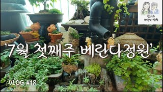 [엄마의 베란다정원(Vlog) #18] 7월 첫째주 베…