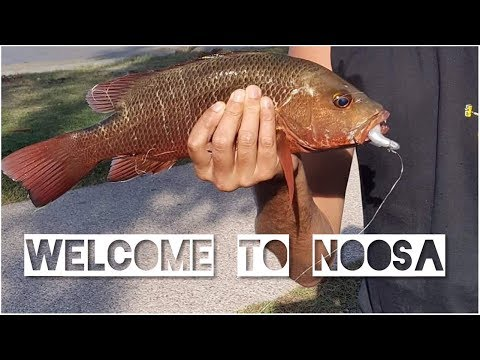 Welcome To Noosa