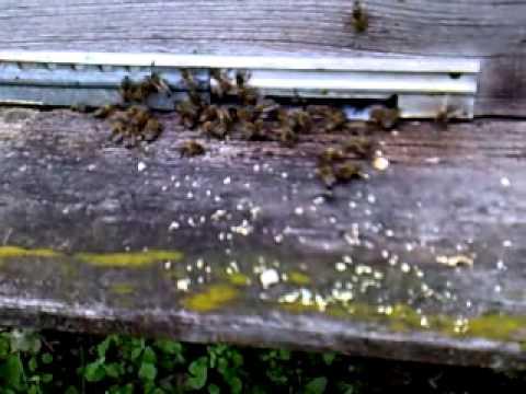Препарат Уник-1 для лечения пчелиных семей