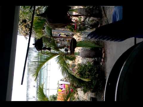 Chào mào Bình Dương cây khế
