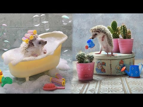 Cutest Animals Videos Compilation Cute Moment of the Animals – Baby Animals #2