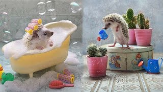 Cutest Animals Videos Compilation Cute Moment of the Animals - Baby Animals #2