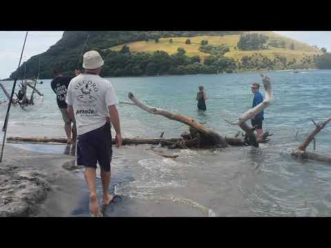 Shark Fishing - Tag & Release, New Zealand