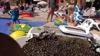 Holiday 2016 Majorca hotel Fergus Europa