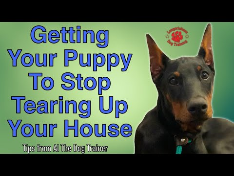 How Do I Get My Puppy To Stop Chewing Up My Carpet? - Tips From Al The Dog Trainer