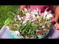 How to Germinate Any Seeds Easily - Why Seeds Do Not Sprout - Harley Seeds / Organic Freak