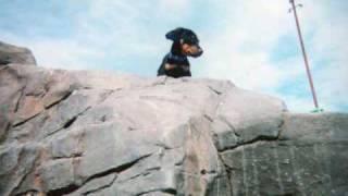 Don't Call Me Dash Hound I'm All Dachshund