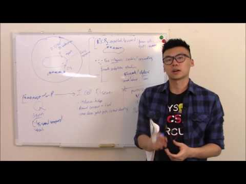 USMLE Biochemistry 19 Cell Biology: Structure, Organelles, and Cytoskeleton