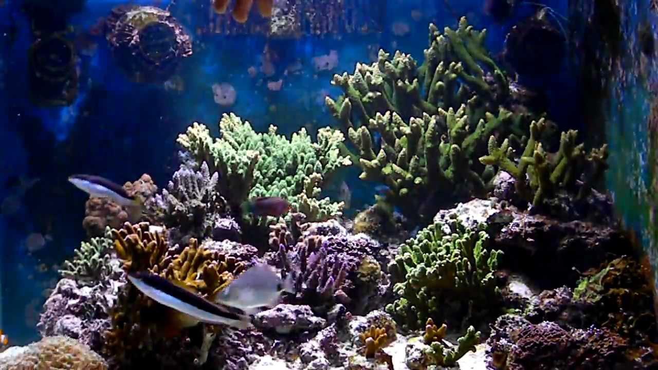 Acquario marino tropicale youtube for Acquario marino