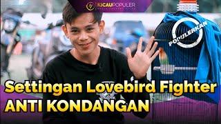 Download lagu JARANG KONDANGAN DENGAN PERAWATAN INI | SETTINGAN LOVEBIRD SINGLE FIGHTER