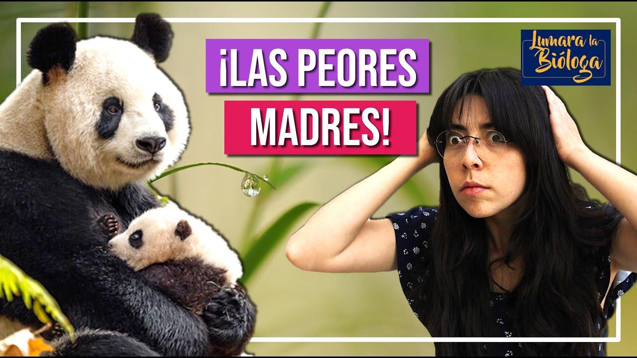 Las madres más malas del reino animal | Con LUMARA LA BIÓLOGA.