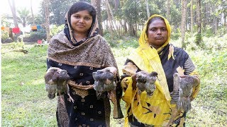 Village Food - Cooking Delicious Pigeon So Yummy || Cooking 7 Pigeon Curry in My Village Super Taste