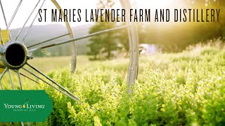 St. Maries Lavender Farm and Distillery | Young Living Essential Oils