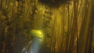 Подводная охота 6 - 2016.(Краткий отчёт об одной из летних подводных охот на щучьем озере., 2016-09-02T05:13:10.000Z)