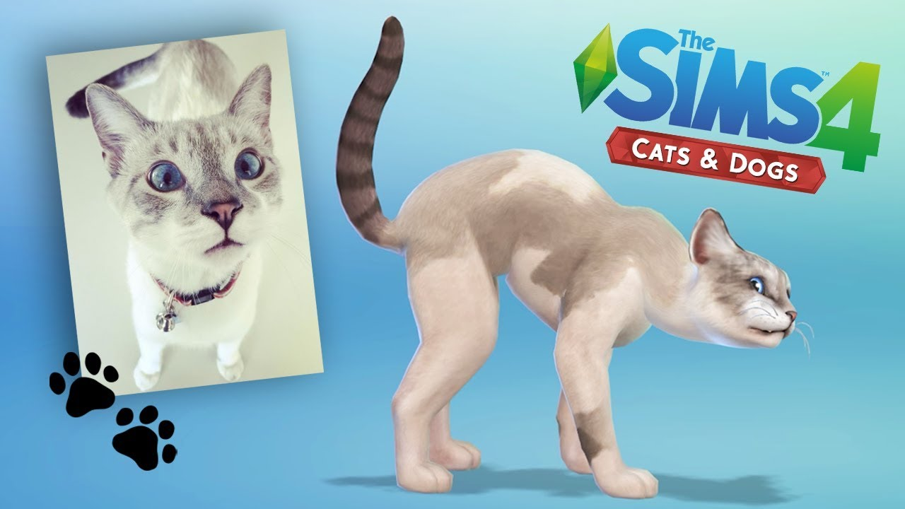 Sims Cats And Dogs How To Get Cats