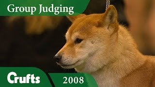 Japanese Shiba Inu (Doge!) wins Utility Group Judging at Crufts 2008 | Crufts Dog Show