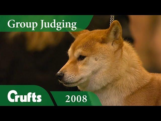 Japanese Shiba Inu (Doge!) wins Utility Group Judging at Crufts 2008 | Crufts Classics