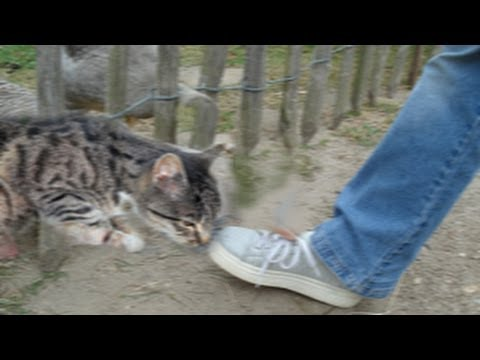 animal-abuse-video!-brooklyn-man-kicks-cat-while-friends-laugh-&-take-pictures-for-facebook!