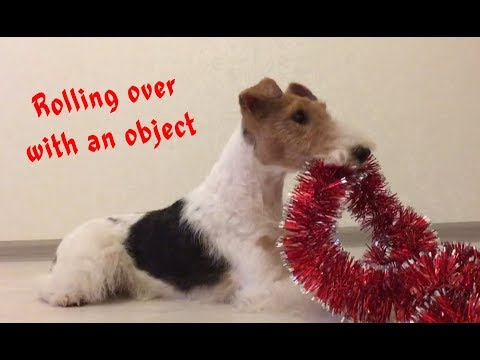 Dog Trick Tutorial / How to teach your dog... / Как научить собаку делать кувырок с предметом