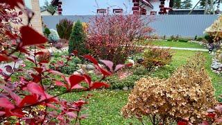 Цветник на 17 октября 🍁🍂🍁Мои почвопокровные растения🍃готовлю розы к зимовке🌹