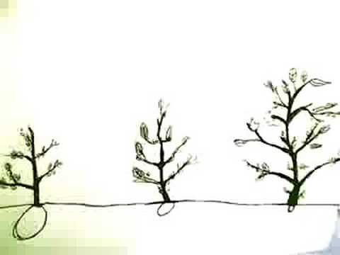 Mustard Plant Seed (Animation Pics) - Youtube