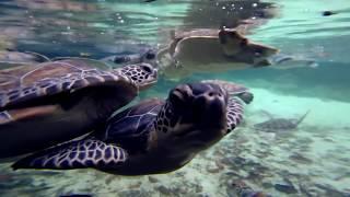 #TORTUGATÓN 2018: 1 HASHTAG = $1.00 PESO   Xcaret México! Cancún Eco Park