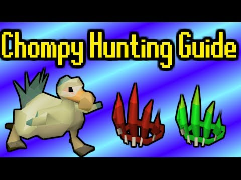 In-Depth Chompy Hunting Guide (150+ An Hour) - OSRS