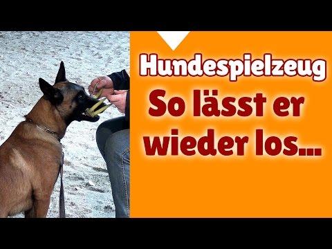 Hundetraining mit Steffi ► So lässt dein Hund das Hundespielzeug wieder los