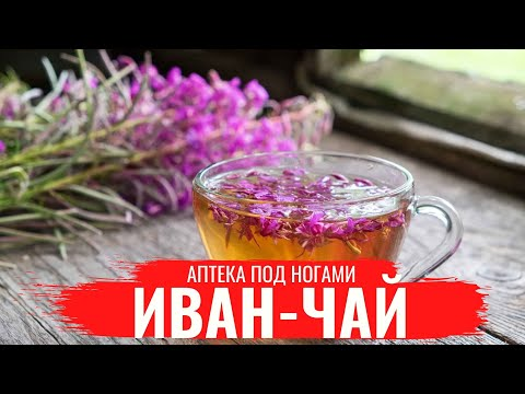 Аптека под ногами. Иван-чай (Кипрей)