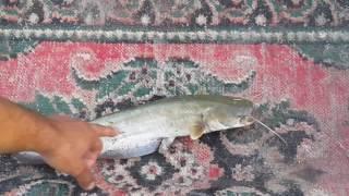 صيد السمك في السنارة   نهر دجلة