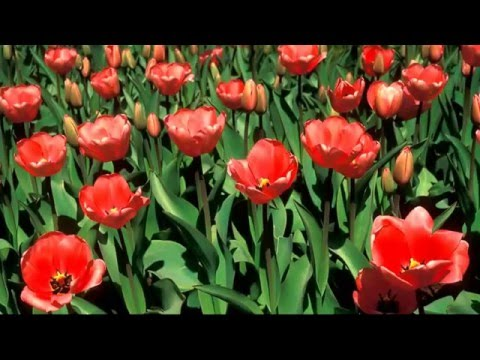 พืชพันธุ์ธรรมชาติ รูปดอกไม้ต้นไม้สวยๆ