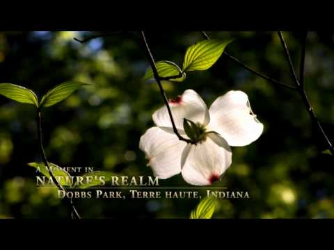 A Moment In Nature's Realm: Dobbs Park, Terre Haute, Indiana, Woodland Chorus of Birds