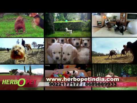 Harbopet herbal veterinary products 9022177177