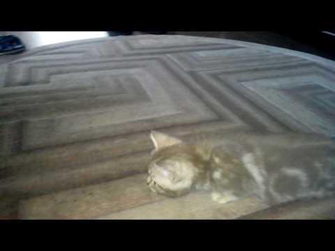 Игры котята