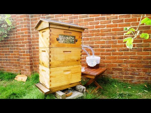 Flow hive Honey harvesting & Beekeeping with Adrian and his 89 year old Mum - UK
