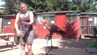 Red Kite Training