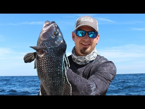 How to Go Offshore Bottom Fishing for Blueline Tilefish and Sea Bass