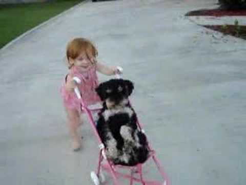 Frenchie the dog in baby stroller