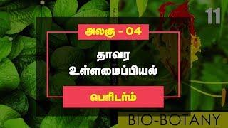 Botany Video Lesson - Periderm