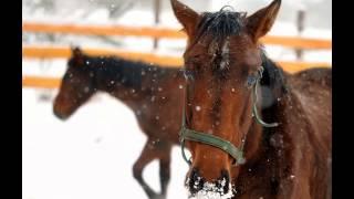 Konie to nie tylko zwierzęta :))