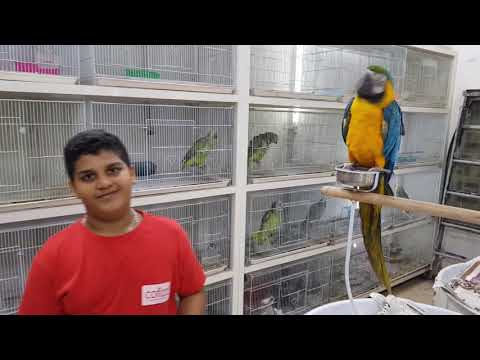 Sharjah Birds and Animals Market